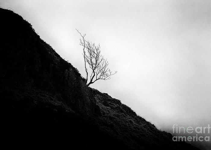 Beautiful Scotland Greeting Card featuring the photograph Tree In Mist by John Farnan