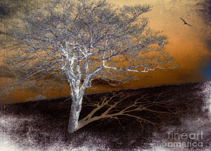 North Carolina Greeting Card featuring the photograph Tree In Snow In The Blue Ridge IIi by Dan Carmichael