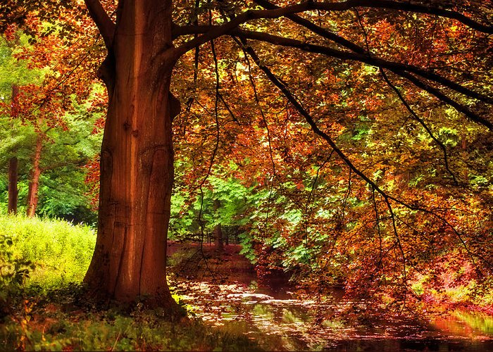 Utrecht Greeting Card featuring the photograph Tree In The Park. De Haar Castle. Utrecht by Jenny Rainbow