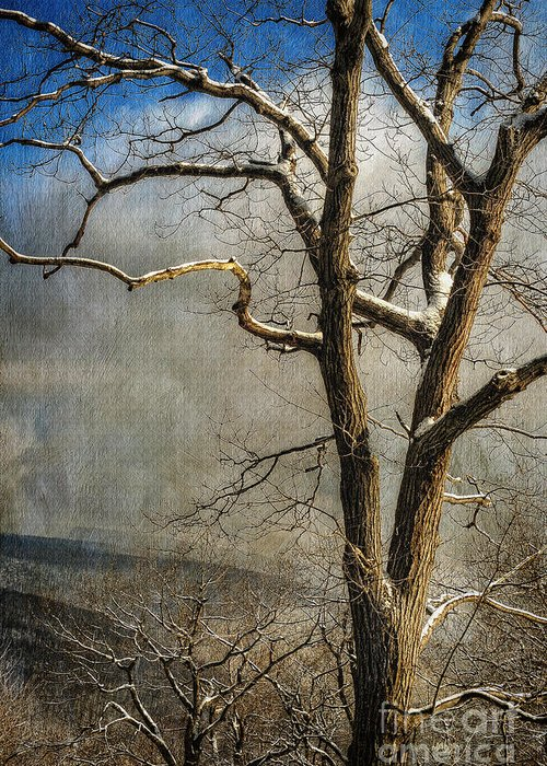 Winter Greeting Card featuring the photograph Tree In Winter by Lois Bryan