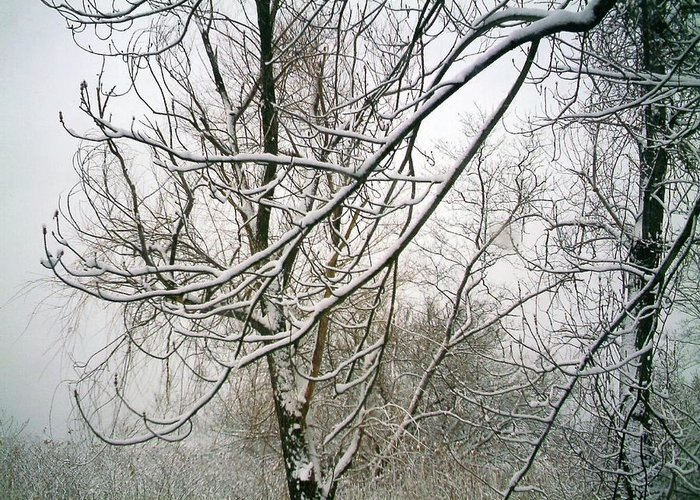Landscape. Treescape. Photograph Of Snow Covered Tree Greeting Card featuring the photograph Tree Lace by Desline Vitto
