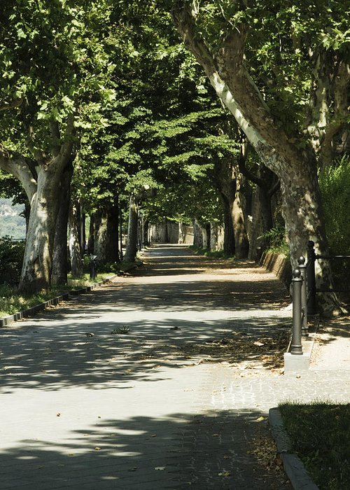 Landscape Greeting Card featuring the photograph Tree Lined Promenade by William Crenshaw