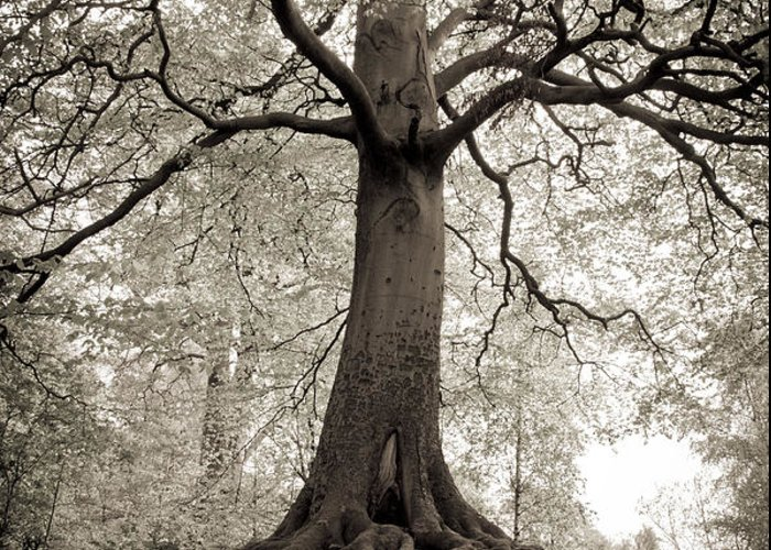 Tree Greeting Card featuring the photograph Tree Of Life by Dominique De Leeuw