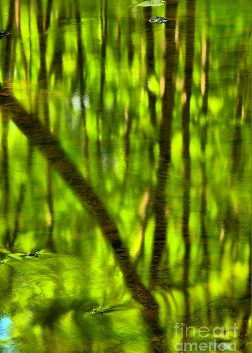Tree Reflections Greeting Card featuring the photograph Tree Reflections by Adam Jewell