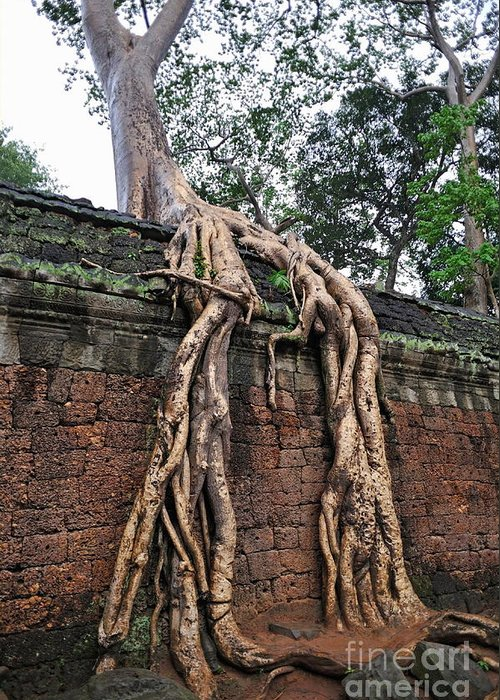 Tree Greeting Card featuring the photograph Tree Roots On Ruins At Angkor Wat by Sami Sarkis