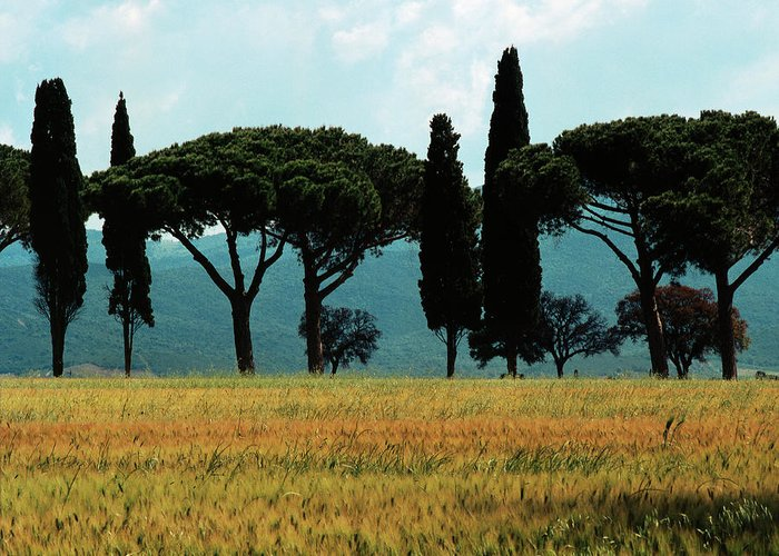 Heiko Greeting Card featuring the photograph Tree Row In Tuscany by Heiko Koehrer-Wagner