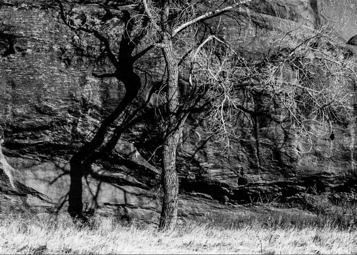 Black And White Greeting Card featuring the photograph Tree Shadow by Karen Saunders