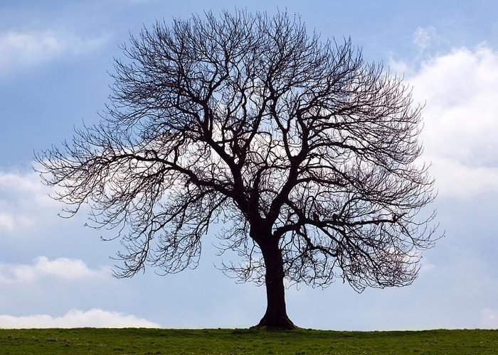 Tree Greeting Card featuring the photograph Tree Silhouette by Natalie Kinnear