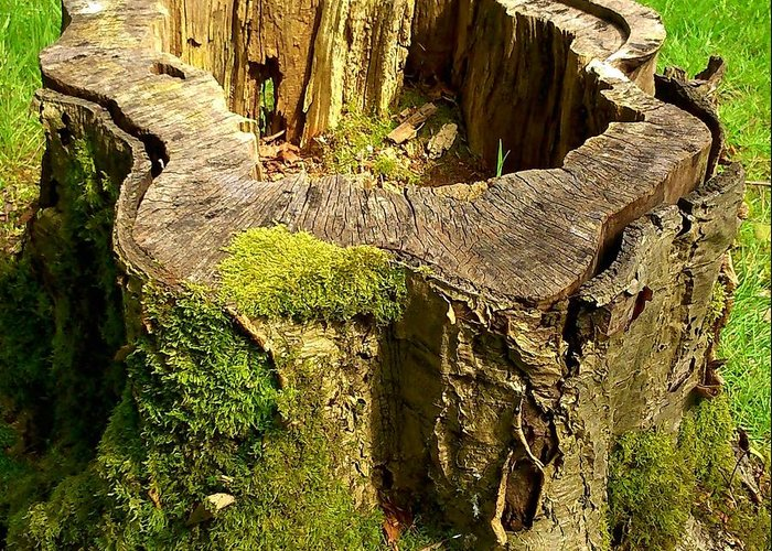Stump Greeting Card featuring the photograph Tree Stump by Phil Nolan