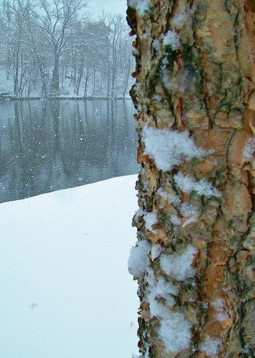 Landscape Greeting Card featuring the photograph Tree Trunk Bark And River In Snowfall by Rory Cubel