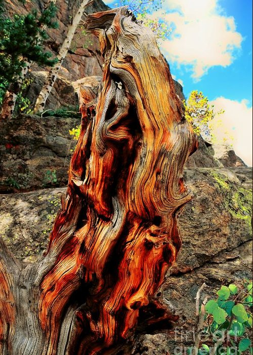Tree Greeting Card featuring the photograph Tree Trunk by Kathleen Struckle