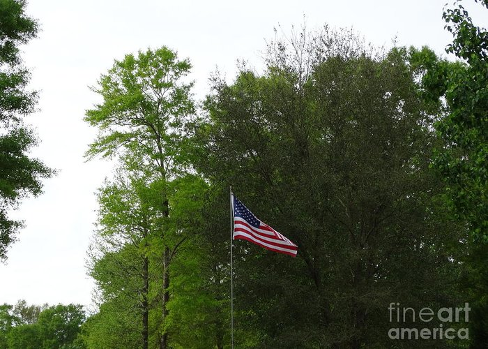 Flag Greeting Card featuring the photograph Trees And Flag by Joseph Baril
