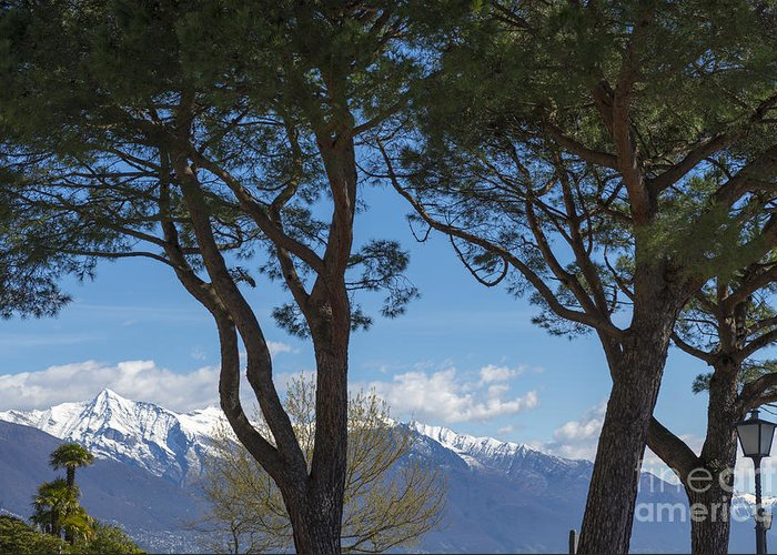 Trees Greeting Card featuring the photograph Trees And Snow-capped Mountain by Mats Silvan