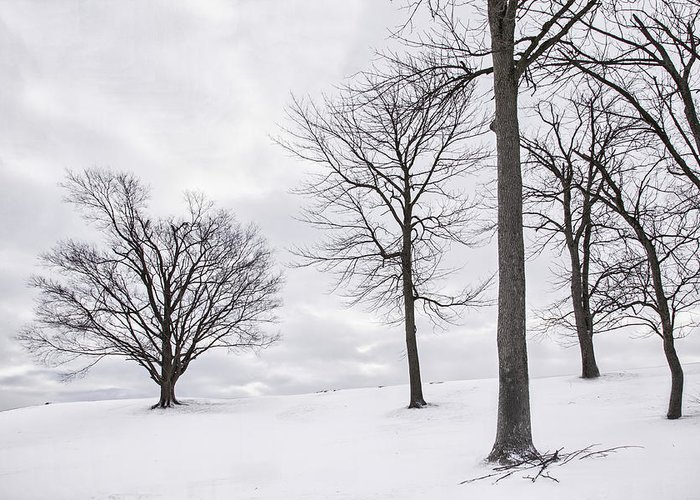 Kentucky Greeting Card featuring the photograph Trees And Snow by Wendell Thompson