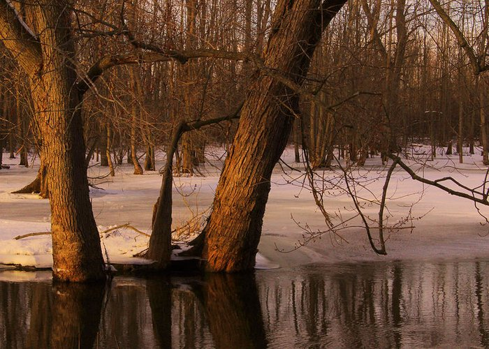Landscape Greeting Card featuring the photograph Trees At Collins Creek by Jim Vance