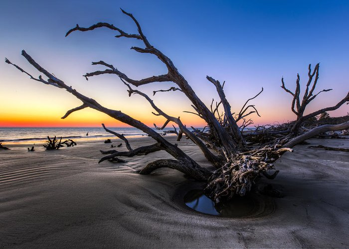 Clouds Greeting Card featuring the photograph Trees At Driftwood Beach by Debra and Dave Vanderlaan