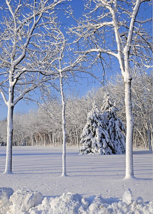 No People; Vertical; Outdoors; Day; Winter; Snow; Landscape; Tree; Tranquil Scene; Scenics; Beauty In Nature; Travel; Clear Sky; Usa; Wisconsin; Bare Tree Greeting Card featuring the photograph Trees In Snow Wisconsin by Anonymous