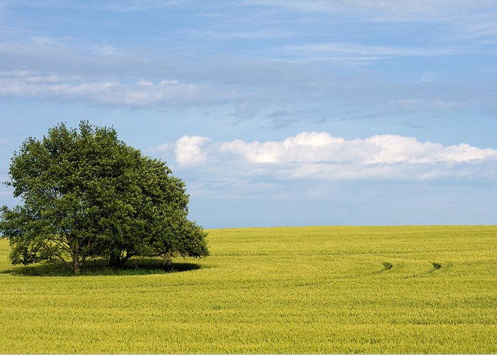 Grass Family Greeting Card featuring the photograph Trees In Wheat Field by Simplycreativephotography