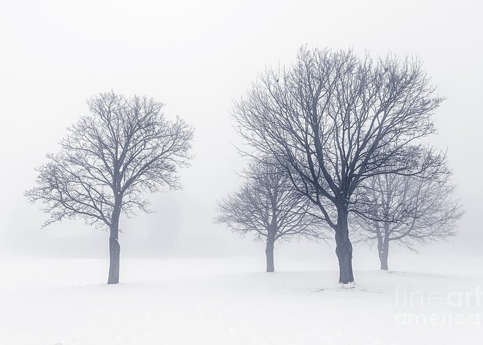 Trees Greeting Card featuring the photograph Trees In Winter Fog by Elena Elisseeva