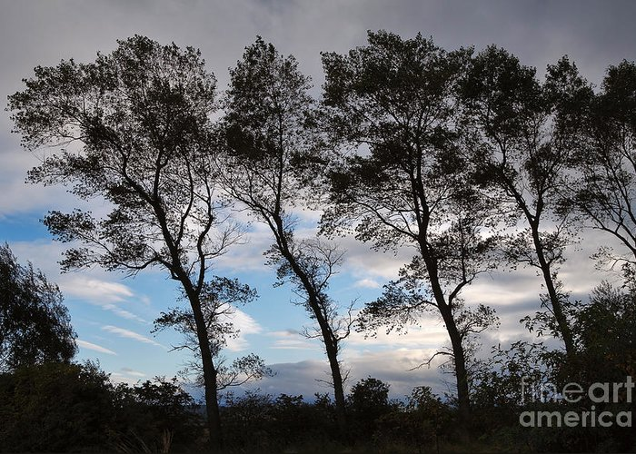 Nature Greeting Card featuring the photograph Trees by Louise Heusinkveld