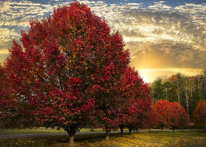 Clouds Greeting Card featuring the photograph Trees On Fire by Debra and Dave Vanderlaan