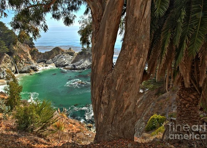 Mcway Falls Greeting Card featuring the photograph Trees Over Mcway Falls by Adam Jewell