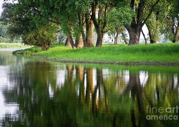 Heiko Greeting Card featuring the photograph Trees Reflection On The Lake by Heiko Koehrer-Wagner