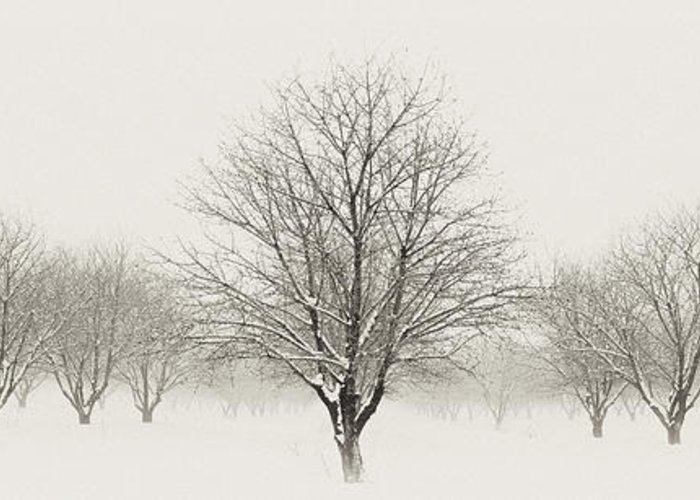 Snow Greeting Card featuring the photograph Treeternity by Jim Speth