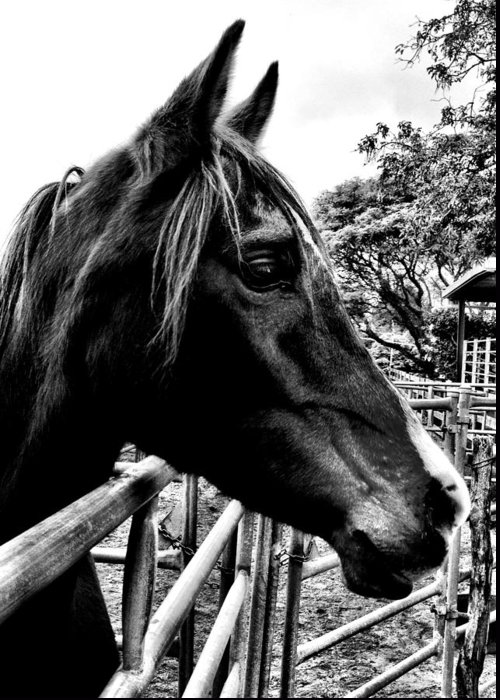 Horse Greeting Card featuring the photograph Trinity by Julianne Baltrus