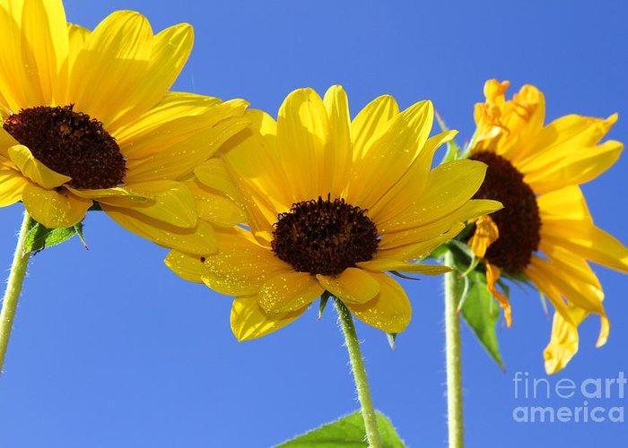 Daisy Greeting Card featuring the photograph Trio In The Sun - Yellow Daisies By Diana Sainz by Diana Raquel Sainz