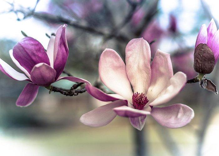 Purple Greeting Card featuring the photograph Triple Purple Flowers by Jon Cody