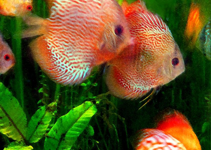 Fish Greeting Card featuring the painting Tropical Discus Fish Group by Amy Vangsgard