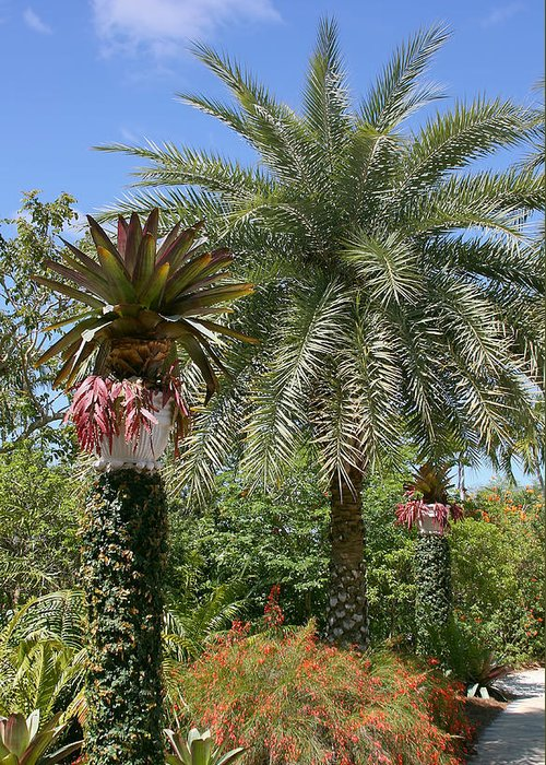 Palm Greeting Card featuring the photograph Tropical Garden by Kim Hojnacki