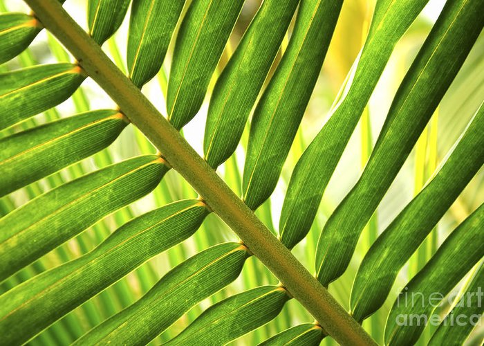 Palm Greeting Card featuring the photograph Tropical Leaf by Elena Elisseeva