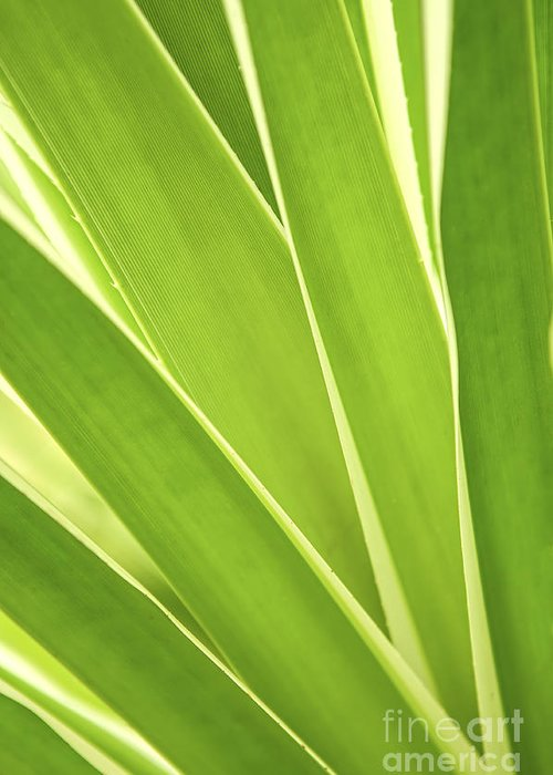 Leaf Greeting Card featuring the photograph Tropical Leaves by Elena Elisseeva