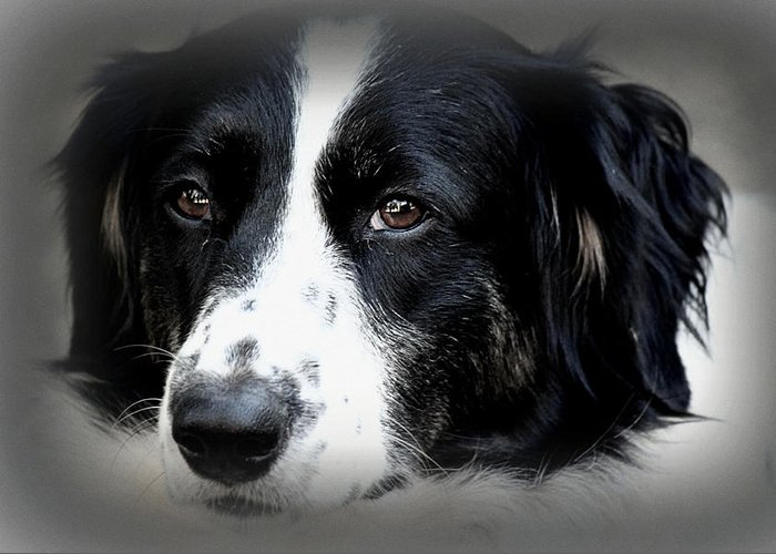 Dog Greeting Card featuring the photograph True Companion by Melanie Lankford Photography