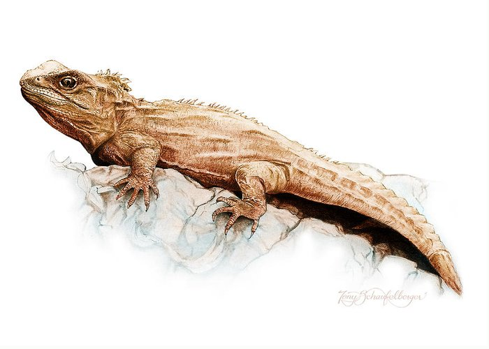 Lizard Greeting Card featuring the drawing Tuatara by Tony Schaufelberger