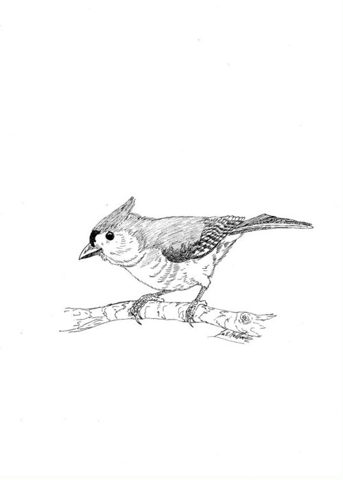 Pen Greeting Card featuring the drawing Tufted Titmouse by Lee Halbrook