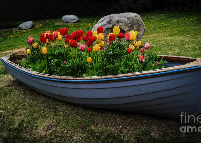 Tulip Boat Greeting Card featuring the photograph Tulip Boat by Mitch Shindelbower