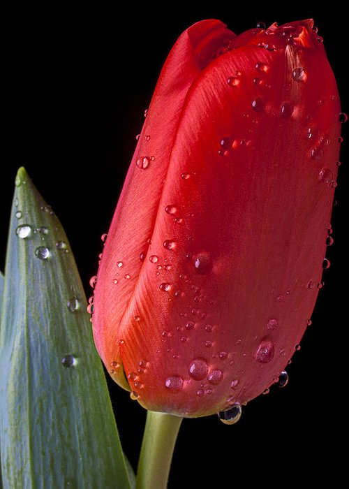 Orange Greeting Card featuring the photograph Tulip Close Up by Garry Gay