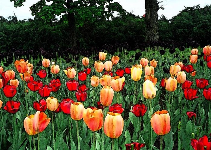 Tulips Greeting Card featuring the photograph Tulip Festival by Zinvolle Art