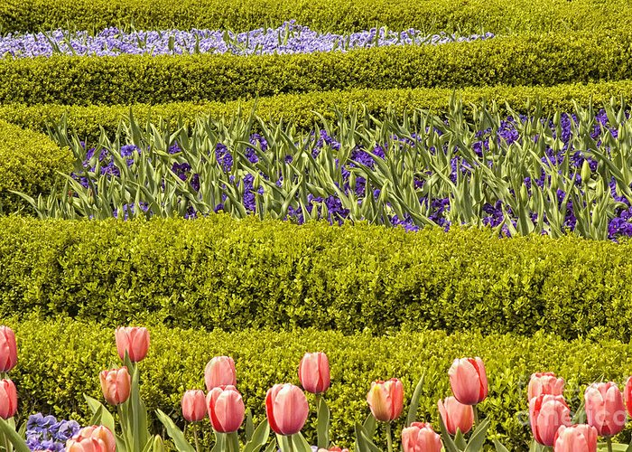 Flowers Greeting Card featuring the photograph Tulip Garden by Richard Patrick