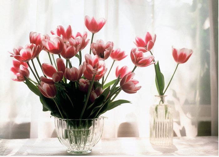 Still-life; Tulips; Flower; Vase; Interior; Pink; White; Floral Greeting Card featuring the painting Tulip by Jeanette Korab