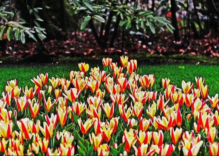 Travel Greeting Card featuring the photograph Tulip Stripe Garden by Elvis Vaughn