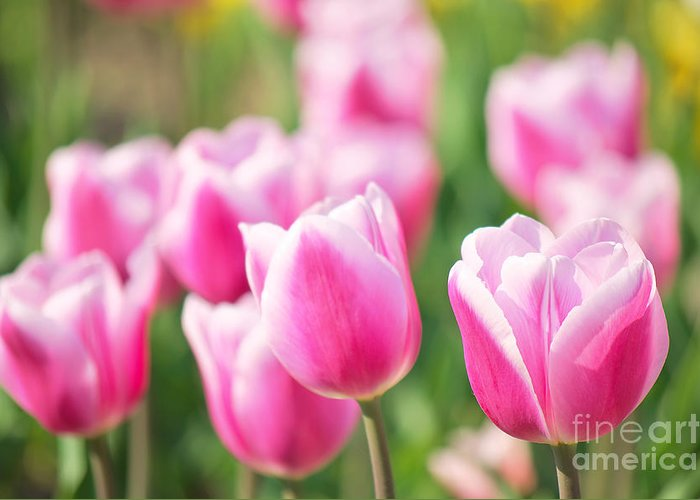 Tulips Greeting Card featuring the photograph Tulip Time by Angela Doelling AD DESIGN Photo and PhotoArt