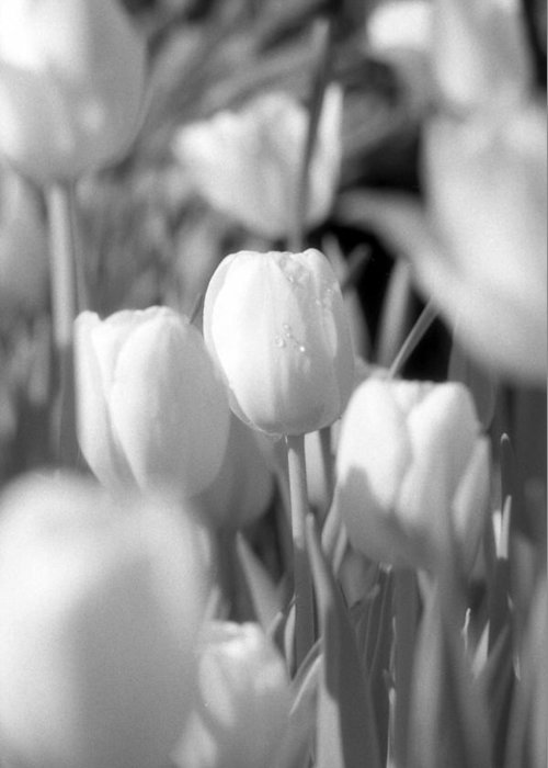 Tulip Greeting Card featuring the photograph Tulips - Infrared 10 by Pamela Critchlow