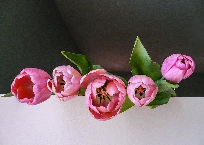 Pink Greeting Card featuring the photograph Tulips by Jacqueline Milner