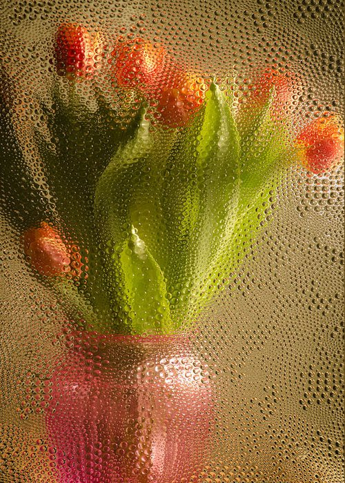 Tulips Greeting Card featuring the photograph Tulips by Lisa Bryant