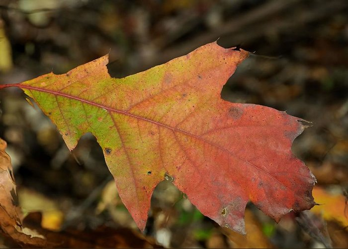 Autumn Greeting Card featuring the photograph Turn A Leaf by JAMART Photography