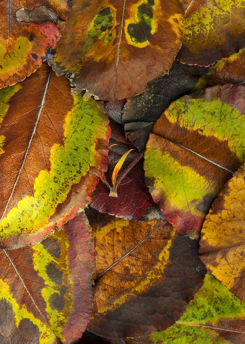 Leaf Greeting Card featuring the photograph Turning Leaves 4 by Stephen Anderson